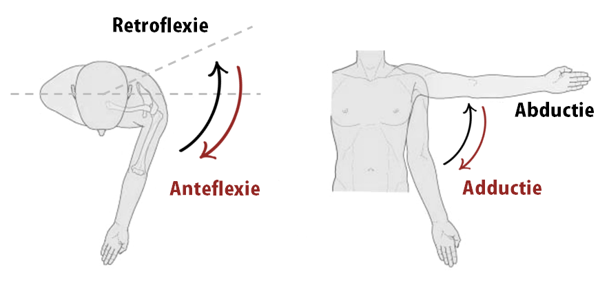 bewegingen-pectoralis-major-anteflexie-adductie-4