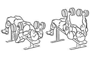 decline-dumbbell-bench-press2